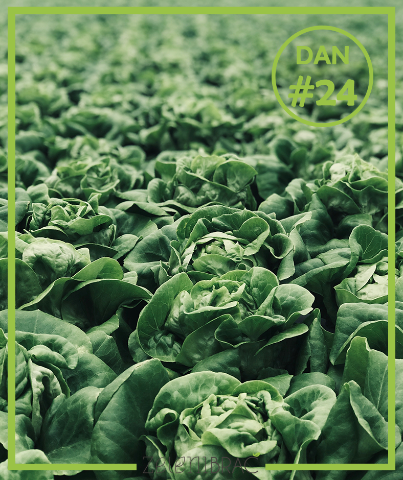 DAY # 24 | EAT MORE PLANTS